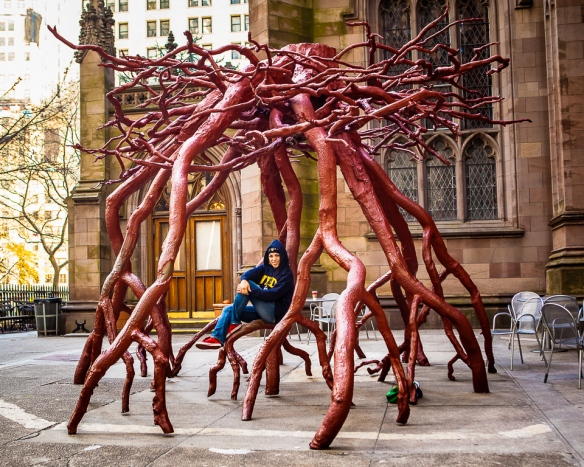 NYC Tree Roots